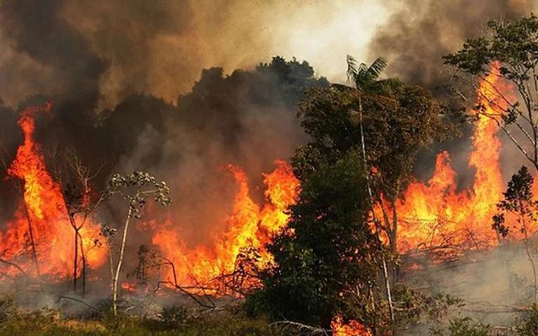amazon fires in brazil