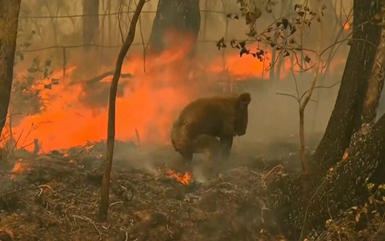 great-relief-from-bushfires-to-new-south-wales-australia