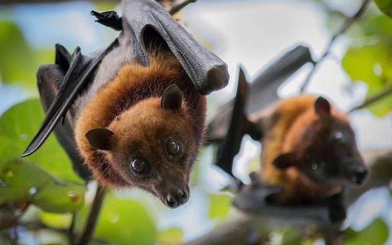 six-types-of-corona-virus-found-in-bats-in-myanmar