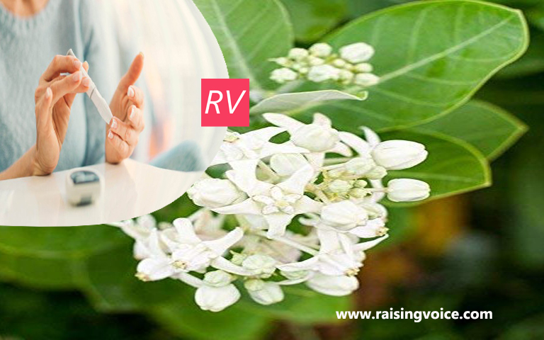 Madar Plant Get Rid of These Disease