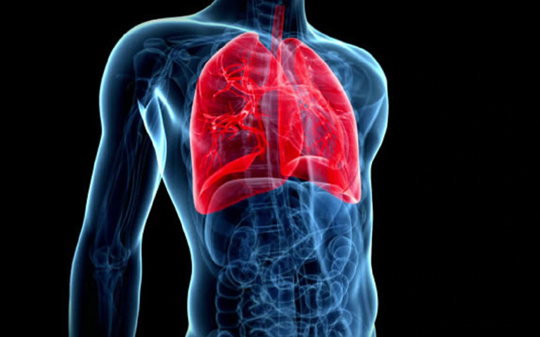 5 Things that clean up your Lungs easily