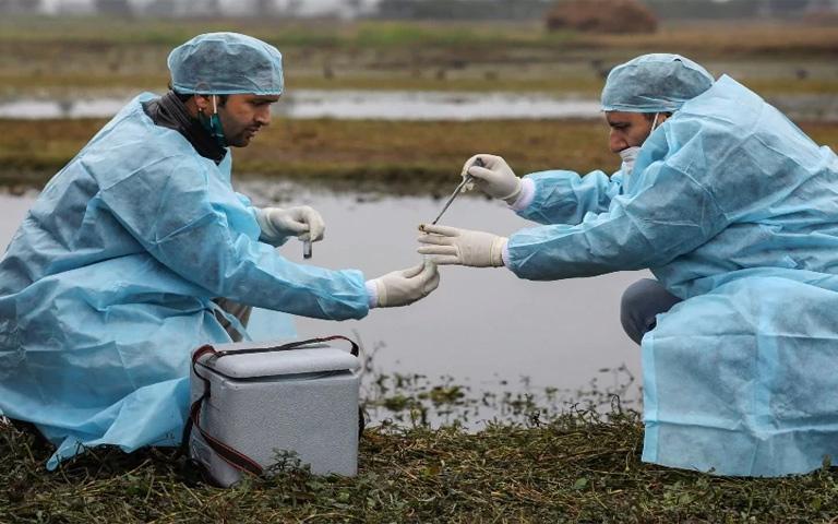 Migratory-birds-will-be-monitored-in-the-wake-of-bird-flu