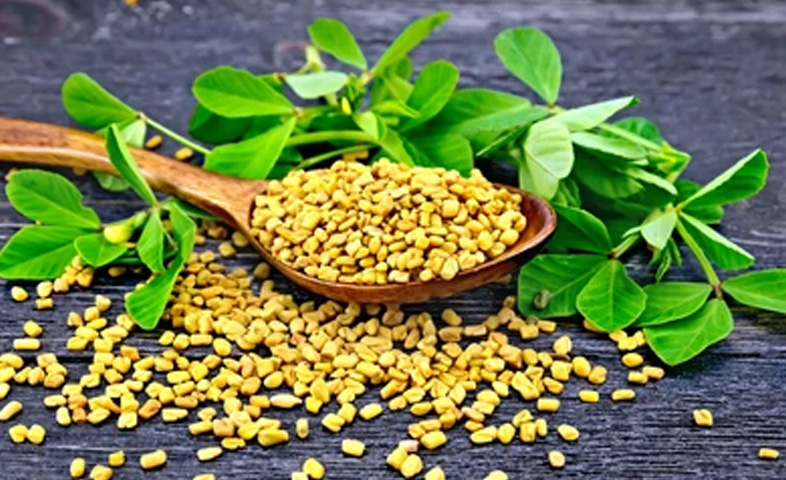 An-Herb-with-Impressive-Health-Benefits