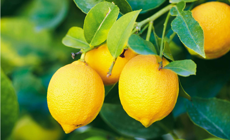 few drops of lemon