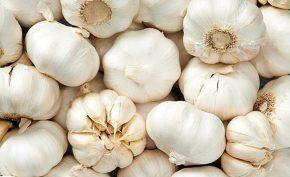 4-Proven-Health-Benefits-of-Garlic