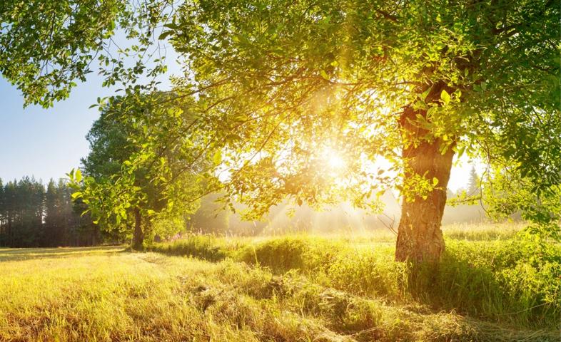 7-Health-Benefits-of-Sunlight