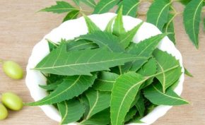 What-are-the-benefits-of-neem