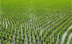 Central government's big step regarding free electricity to farmers