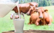 Milk prices have gone up in Punjab from today.Milk prices have gone up in Punjab from today.